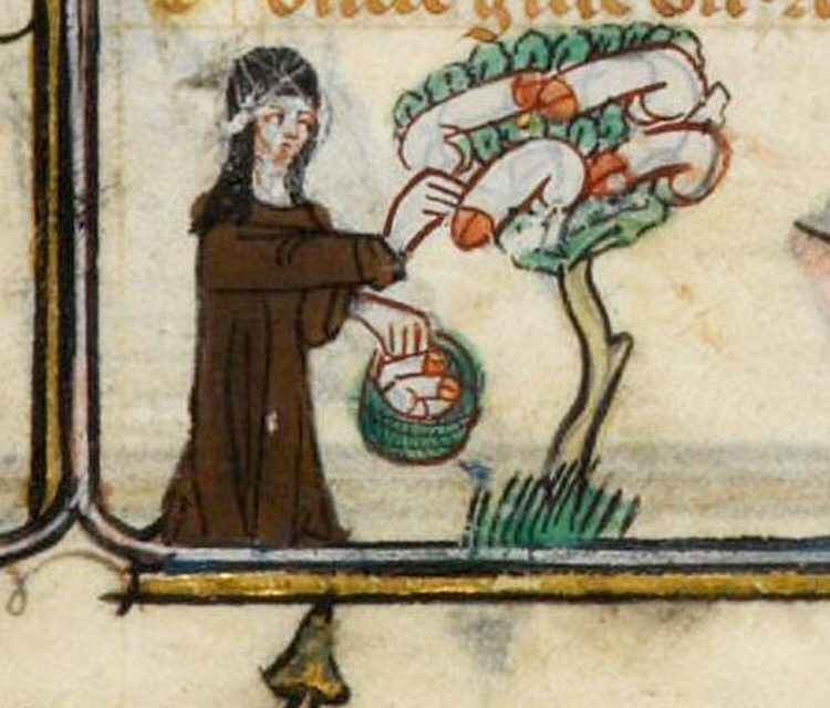 Can't See the Wood for the Trees: The Mysterious Meaning of Medieval Penis Trees